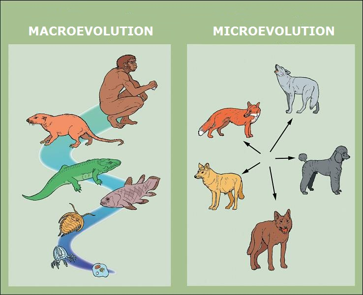 an explanation of creationism and evolution This page includes materials relating to the continuing controversy over the teaching of evolution and creationism in schools cases, links, images.
